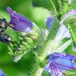 Die Bienenretter