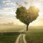 Liebe ist die Basis von Heilung