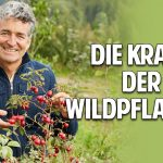 Die Kraft der Wildpflanzen: Wie Du dich gesund selbst versorgen kannst – Dr. Markus Strauß