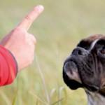 Hundeflüstern und Tierkommunikation